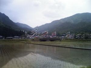 Koinobo